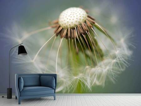 Photo Wallpaper Dandelion Close up