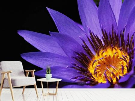 Photo Wallpaper XL water lily in purple