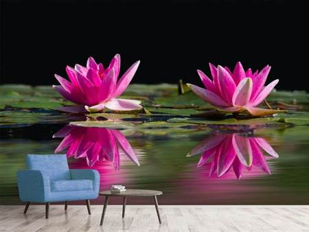 Photo Wallpaper Water Lilies Duo in pink