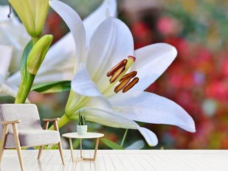 Fototapet Magnificent lily in white