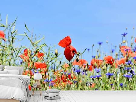 Photo Wallpaper The poppy in the flower meadow