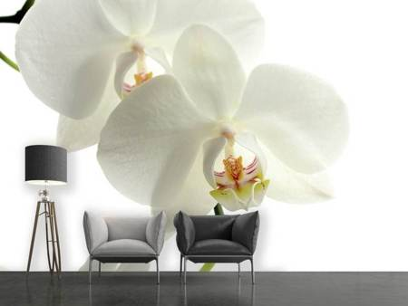 Photo Wallpaper Orchids bloom