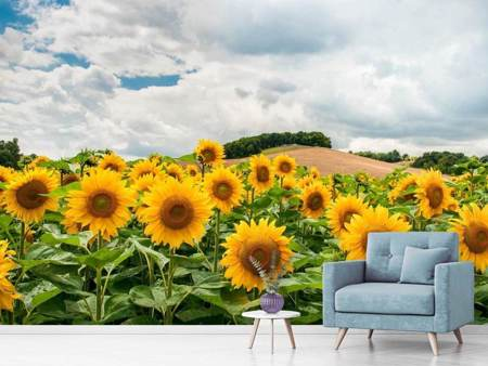 Fototapet Landscape with sunflowers