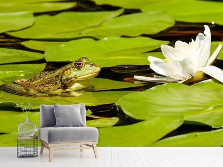 Fototapet The frog and the water lily