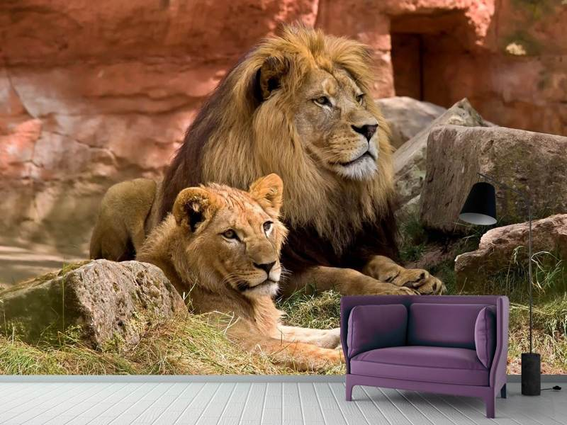 Fototapet A lion couple