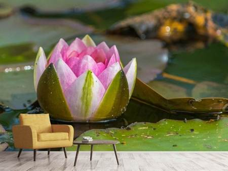 Fototapet XL water lily in pink