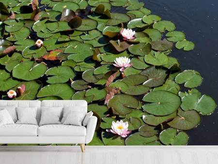 Photo Wallpaper White water lilies in the pond