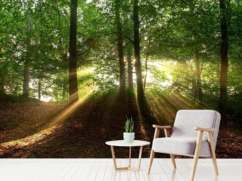Photo Wallpaper Sun in the forest