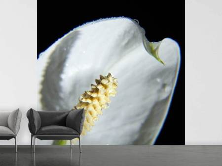 Fototapet Calla Close up in white