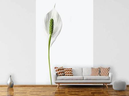 Fototapet The peace lily