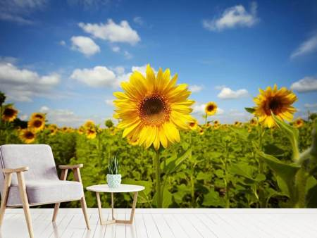 Fototapet Summer Sunflowers