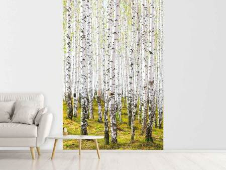 Fototapet The Birch Forest In The Spring