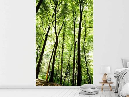 Photo Wallpaper Forest
