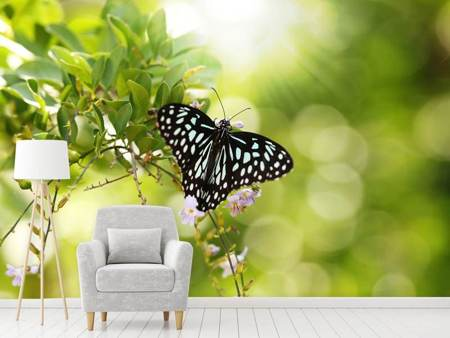 Photo Wallpaper Papilio Butterfly XXL