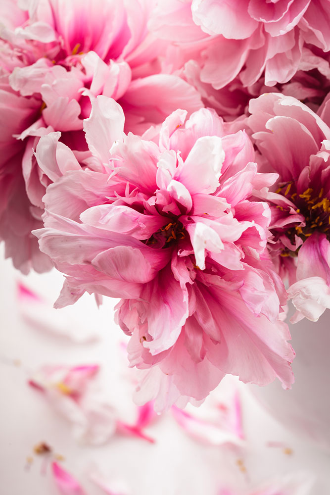 Photo Wallpaper Peonies