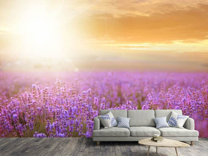 Photo Wallpaper Sunset In Lavender Field