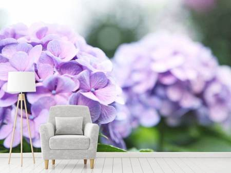 Photo Wallpaper Hydrangeas