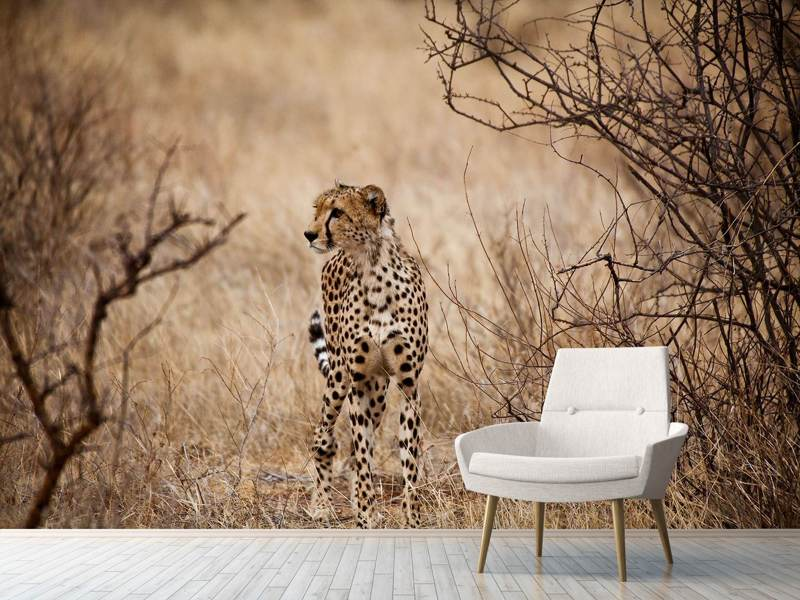 Photo Wallpaper Elegant Cheetah