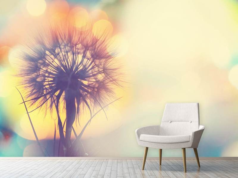 Photo Wallpaper The Dandelion In The Light